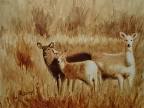 Seneca Deer